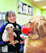 Christine Baroni Pretsch with a yellow lab puppy and adult golden retriever.